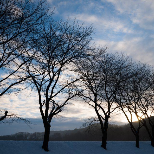 巾着田 冬景