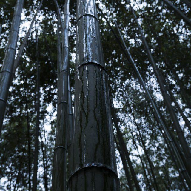 竹林に滴る雨
